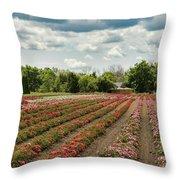 A Summer Dream Of Roses Throw Pillow