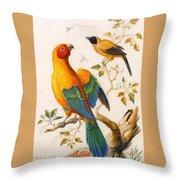 A Sun Conure Parrot  Throw Pillow