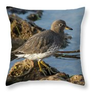 A Surfbird At The Tidepools Throw Pillow