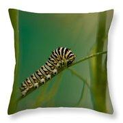 A Swallowtail Butterfly Caterpillar Throw Pillow
