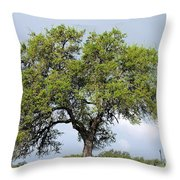 A Tale Of One Tree Throw Pillow
