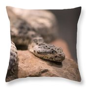 A Tiger Rattlesnake At The Henry Doorly Throw Pillow