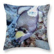 A Titan Triggerfish Faces Throw Pillow
