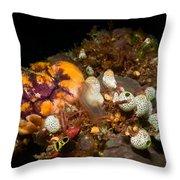 A Ton Of Tunicates Throw Pillow