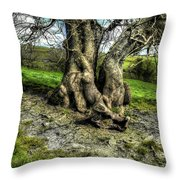 A Tree In A Pool Of Light Throw Pillow