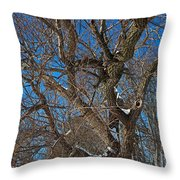 A Tree In Winter- Horizontal Throw Pillow