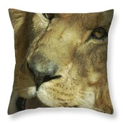A Tribute To Elson 3 Throw Pillow by Ernie Echols