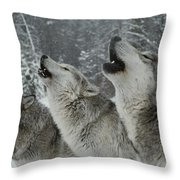 A Trio Of Gray Wolves, Canis Lupus Throw Pillow by Jim And Jamie Dutcher