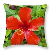 A Very Red Flower Throw Pillow