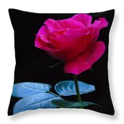A Very Special Rose Throw Pillow