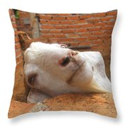A Visit With A Smiling Goat Throw Pillow