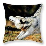 A Warm Stretch Throw Pillow