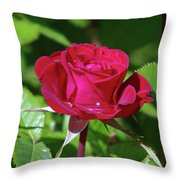 A Watered Rose  Throw Pillow