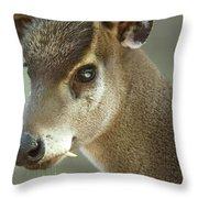 A Western Tufted Deer Elaphodus Throw Pillow