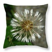 A Wet Dandelion  Throw Pillow
