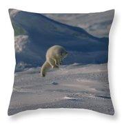 A White Arctic Fox, Alopex Lagopus Throw Pillow