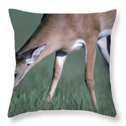 A White-tail Deer Munches On Some Green Throw Pillow