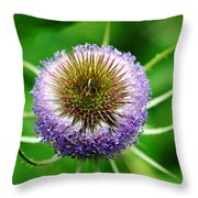 A Wild And Prickly Teasel Throw Pillow