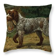 A Wire-haired Pointing Griffon Holds Throw Pillow