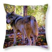 A Wolf Gazes Back Throw Pillow