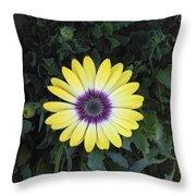 A Yellow Daisy Exhibit Throw Pillow