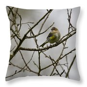 A Yellow-rumped Warbler In The Evening Throw Pillow