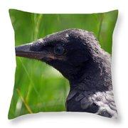 A Young Crow Throw Pillow