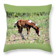 A Young Painted Colt  Throw Pillow