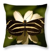A Zebra-winged Butterfly At The Lincoln Throw Pillow