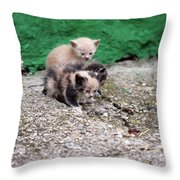 Abandoned Kittens On The Street Throw Pillow