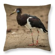 Abdim Stork Walks Right-to-left Across Muddy Ground Throw Pillow