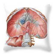 Abdominal Surface Of Diaphragm Throw Pillow