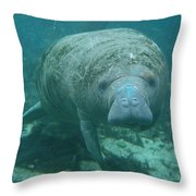 About To Meet A Manatee Throw Pillow
