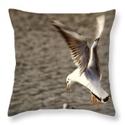 About To Swoop Throw Pillow
