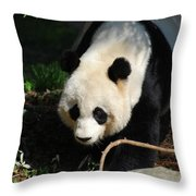 Absolutely Beautiful Giant Panda Bear With A Sweet Face Throw Pillow