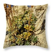 Abundance In The Midst Of Austerity Throw Pillow
