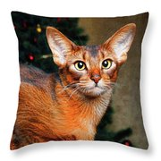Abyssinian Cat In Christmas Tree Background Throw Pillow