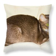 Abyssinian Cat On Chair Pillow, Symbol Of Comfort Throw Pillow
