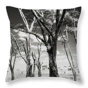 Acacia Tones Throw Pillow