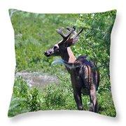 Acadia Buck 2 Throw Pillow
