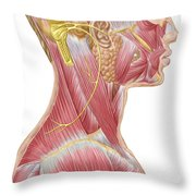 Accessory Nerve View Showing Neck Throw Pillow