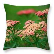Achillae's Heel Throw Pillow