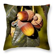 Acorn Cluster Throw Pillow
