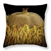 Acorn Emerging Throw Pillow