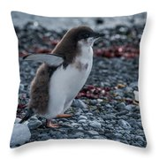 Adelie Penguin Chick Running Along Stony Beach Throw Pillow
