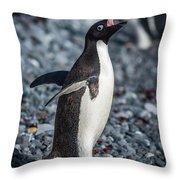 Adelie Penguin Squawking On Grey Shingle Beach Throw Pillow