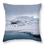 Adelie Penguins On Iceberg Weddell Sea Throw Pillow