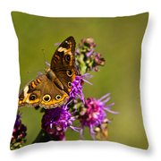 Admiral Butterfly  Throw Pillow by Douglas Barnett