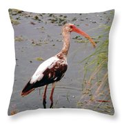 Adolescent Ibis Throw Pillow