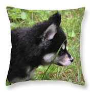 Adorable Alusky Pup Creeping Through Tall Blades Of Grass Throw Pillow